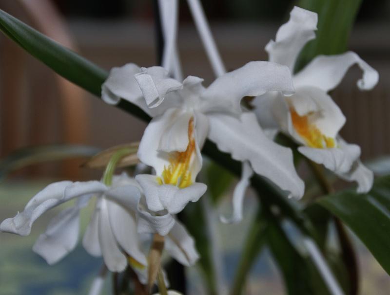 Orchideen-Neuzugang - Seite 2 Img_0119