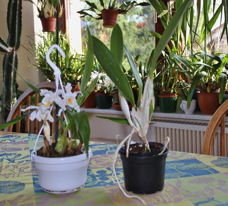 Orchideen-Neuzugang - Seite 2 Img_0120