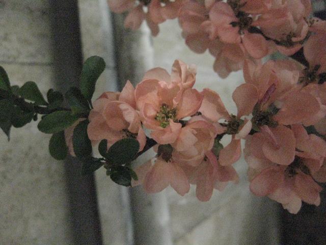 La nostra Primavera - Pagina 3 Img_2412