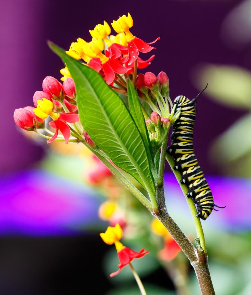 Papillons en liberté 20150311