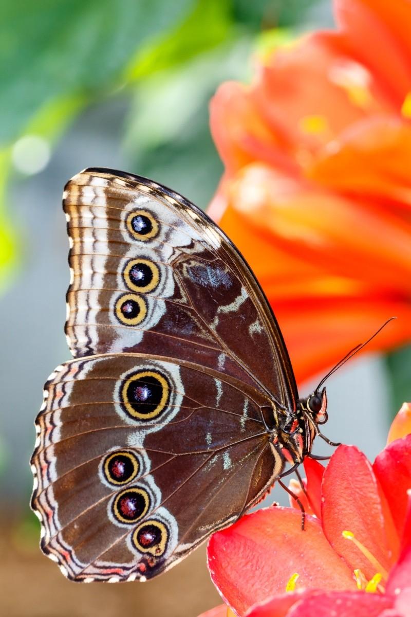 Papillons en liberté 20150312