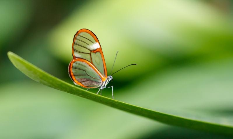 Papillons en liberté 20150313
