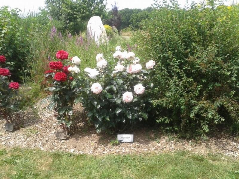 tableau des mamanges essayeuses Mars 2015 - Page 3 Roses_12
