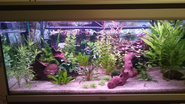 Mon aquarium 400L - Page 2 Dsc_0018