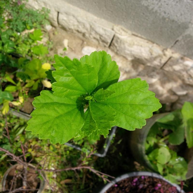 identificazione pianta Img_2020