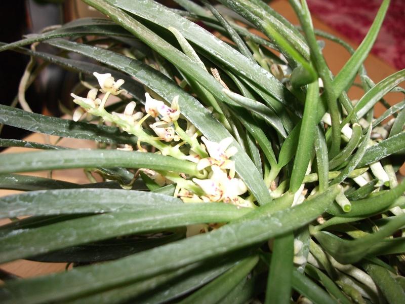 Orchideen-Neuzugang - Seite 2 Dscf3210