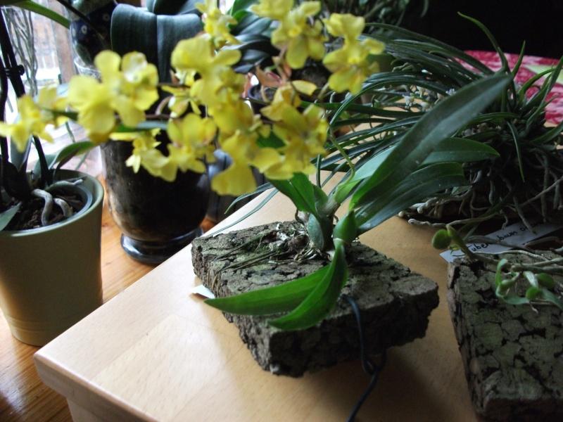 Orchideen-Neuzugang - Seite 2 Dscf3216