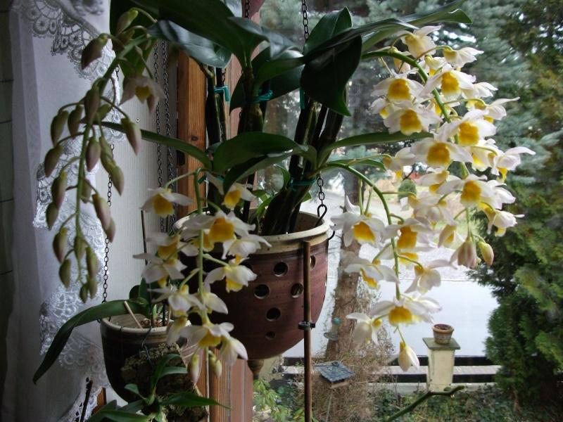 Orchideen-Neuzugang - Seite 2 Dscf3311