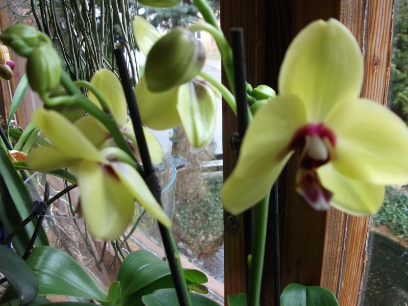 Orchideen-Neuzugang - Seite 2 Dscf3312