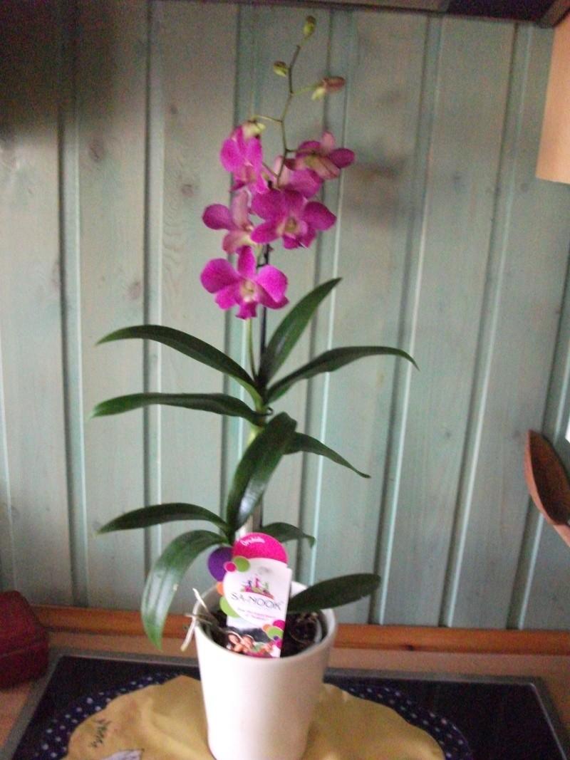 Orchideen-Neuzugang - Seite 2 Dscf3316