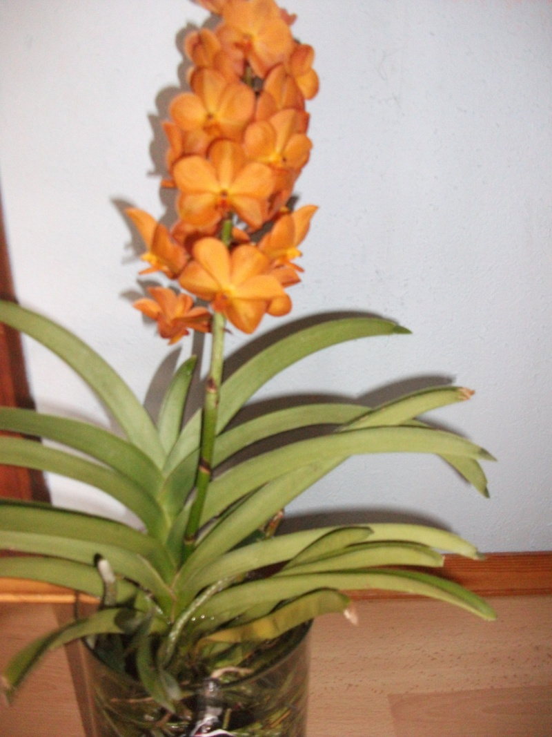 Orchideen-Neuzugang - Seite 3 Dscf3317