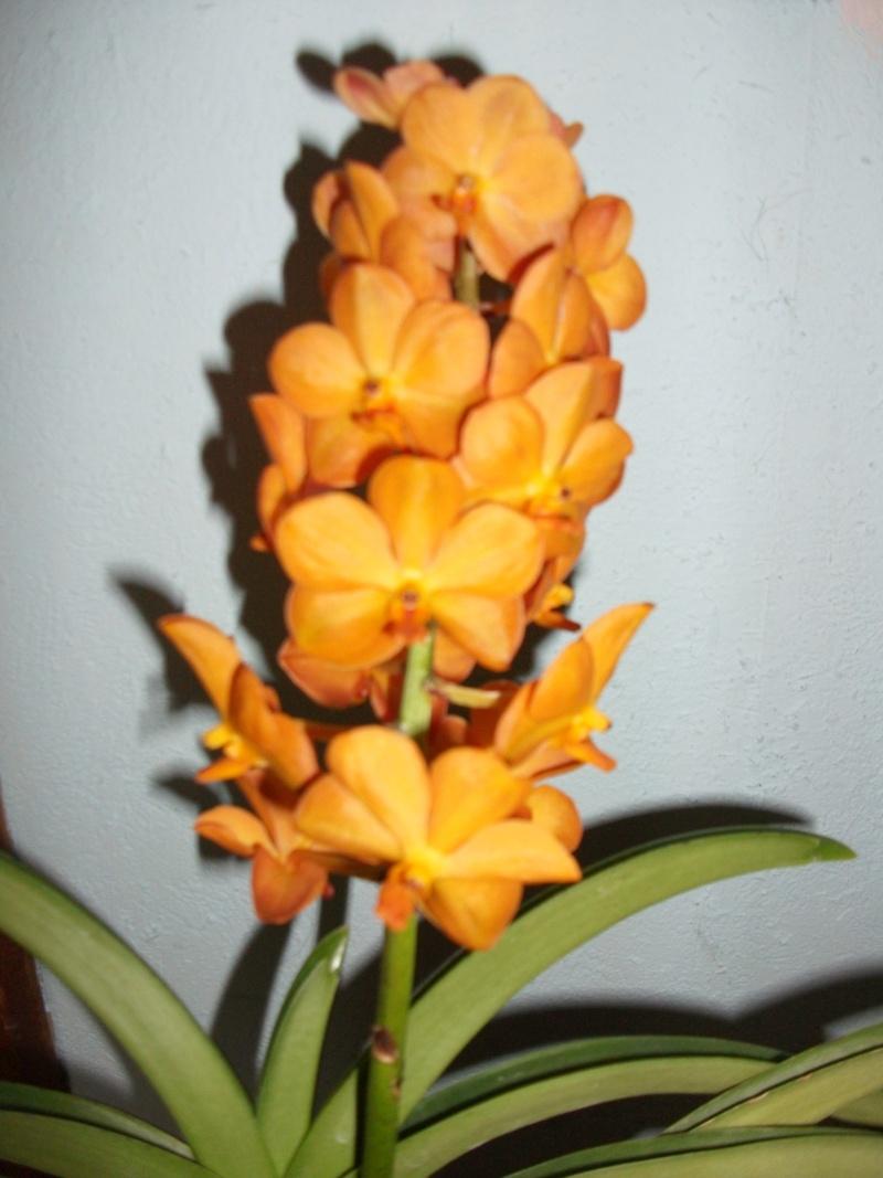 Orchideen-Neuzugang - Seite 3 Dscf3319
