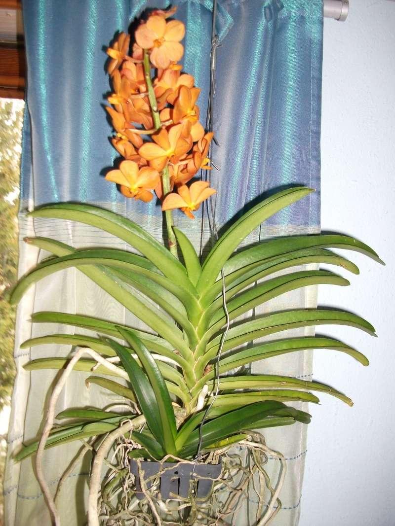 Orchideen-Neuzugang - Seite 3 Dscf3321