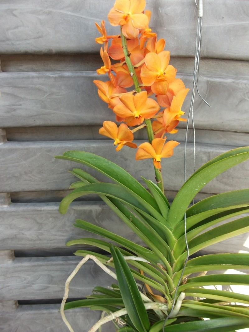 Orchideen-Neuzugang - Seite 3 Dscf3410