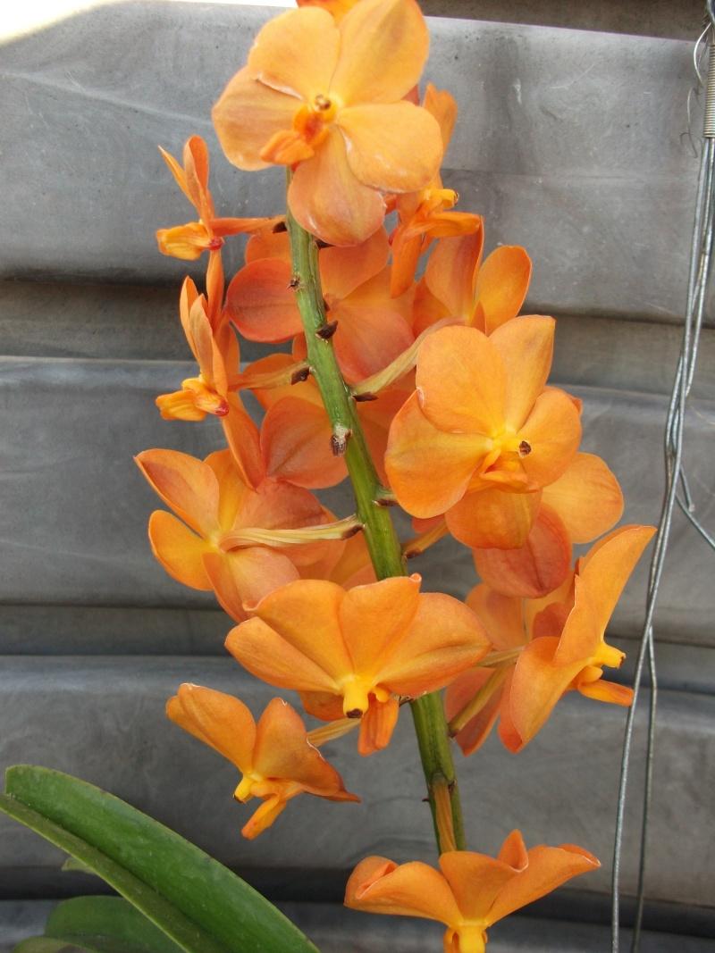 Orchideen-Neuzugang - Seite 3 Dscf3411