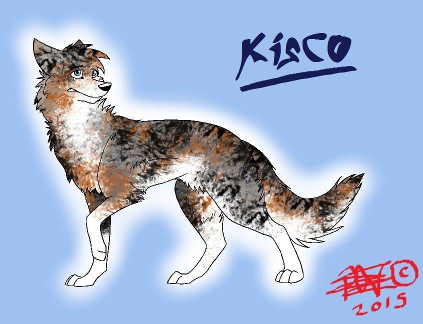 Kisco - Kirjava Nuorimies Mt_kis13