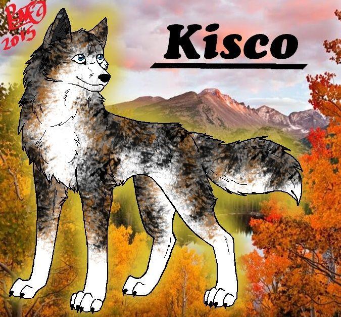 Kisco - Kirjava Nuorimies Mtkisc10