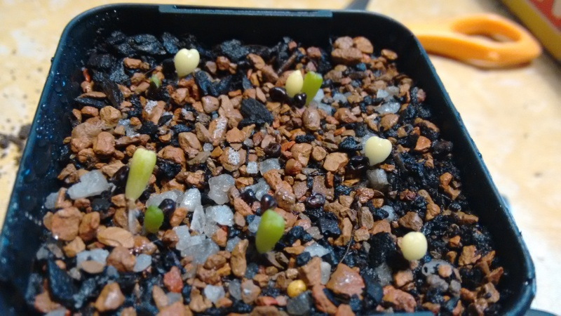 My Seedlings Img_2029