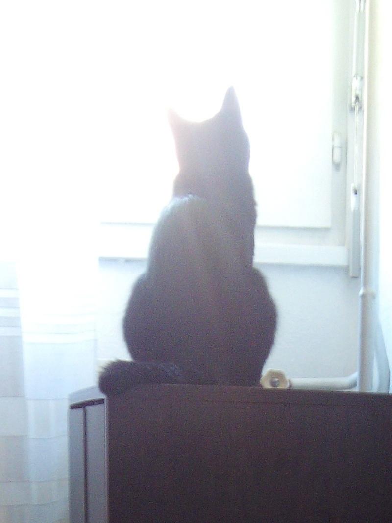 Jezzy, mâle, 28.08.201, noir Img_2010