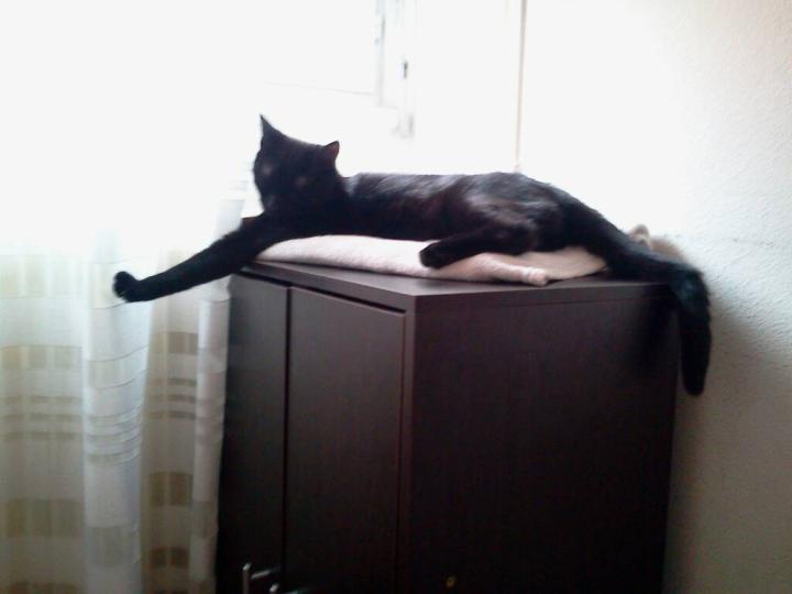 Jezzy, mâle, 28.08.201, noir Mms_2013