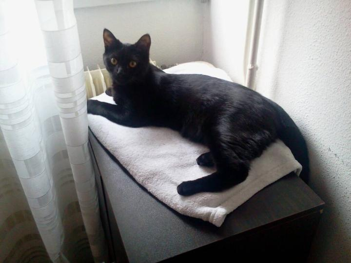 Jezzy, mâle, 28.08.201, noir Mms_2015