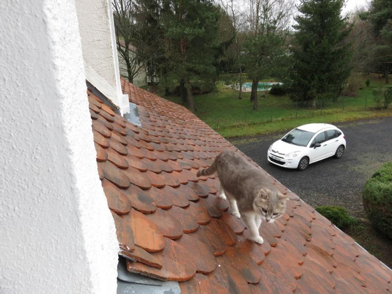 Gentil chat cherche panier retraite pour finir sa petite vie /15 - Page 3 Img_0110