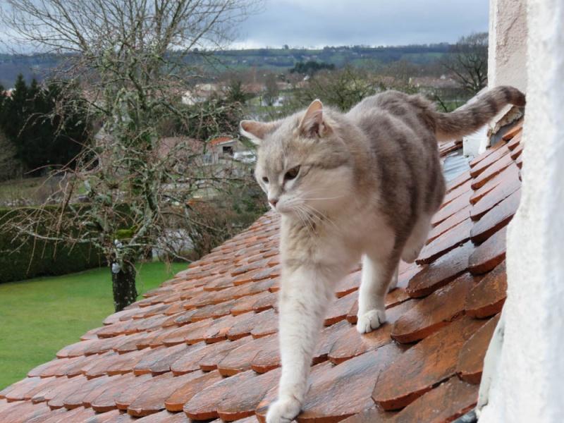 Gentil chat cherche panier retraite pour finir sa petite vie /15 - Page 3 Img_0112