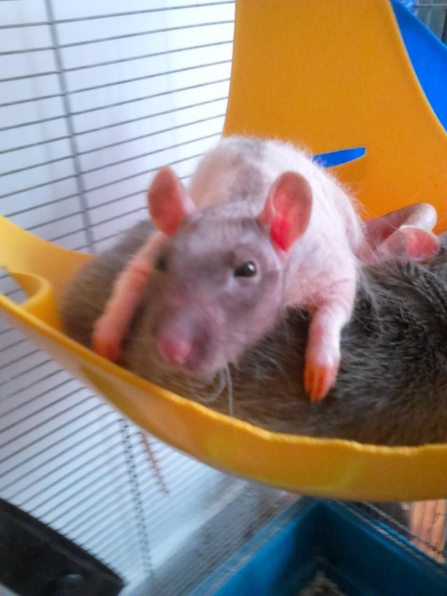 Les ratons de Random 56413