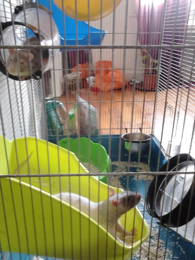 Les ratons de Random 56610