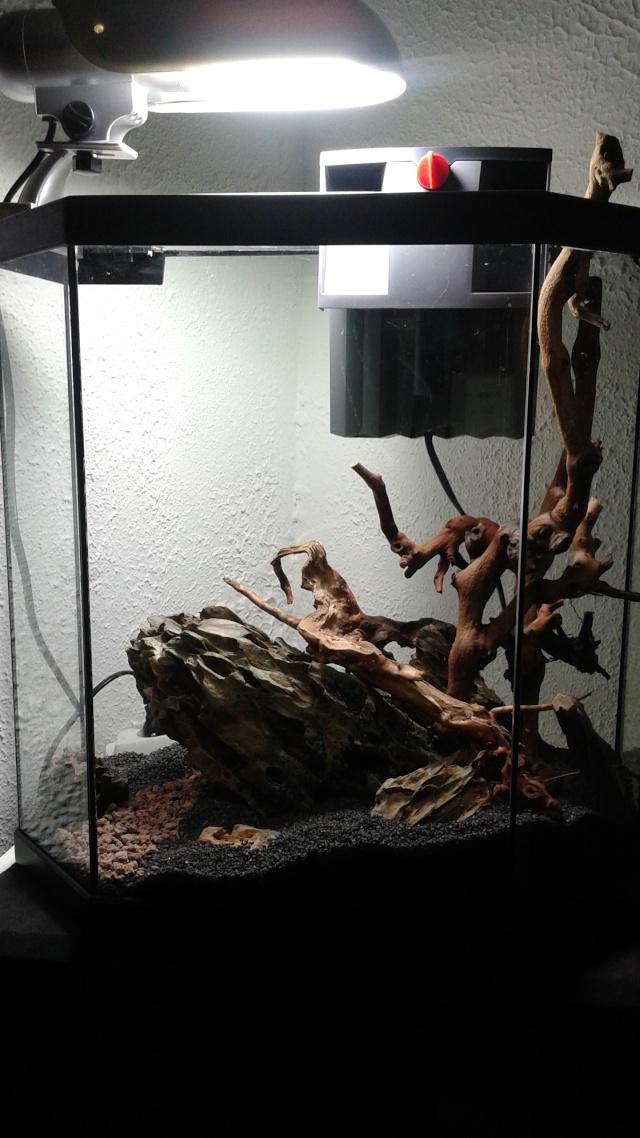 Bac 30L occasion - faire d'une occasion, un vrai aquarium - Page 2 20150312