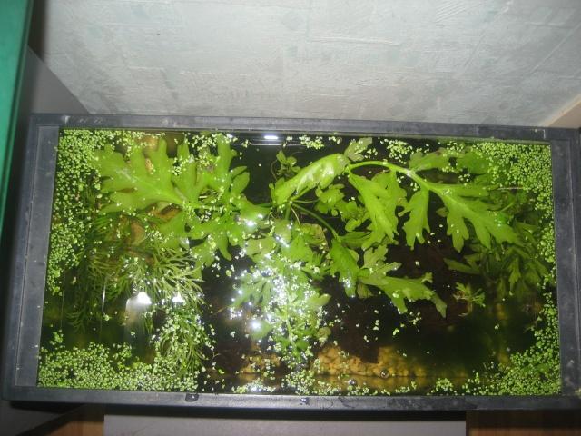 Crevettes... mes premiers pas !!! Aquari11