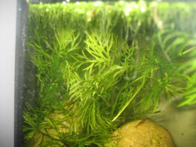 Crevettes... mes premiers pas !!! Aquari17