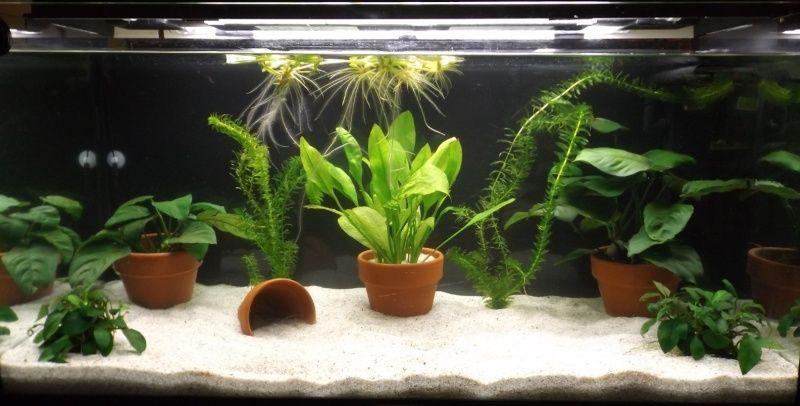 110L Axolotls Voile_14