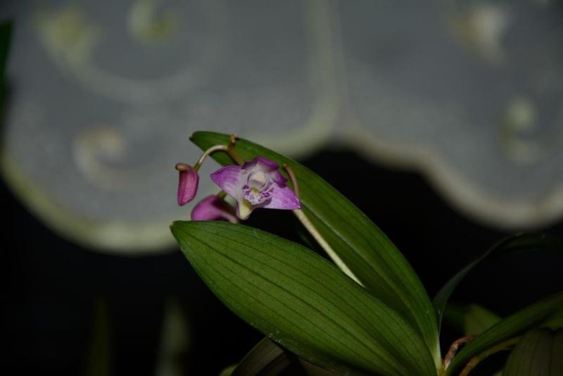 Meine Orchideensammlung Dsc_1510