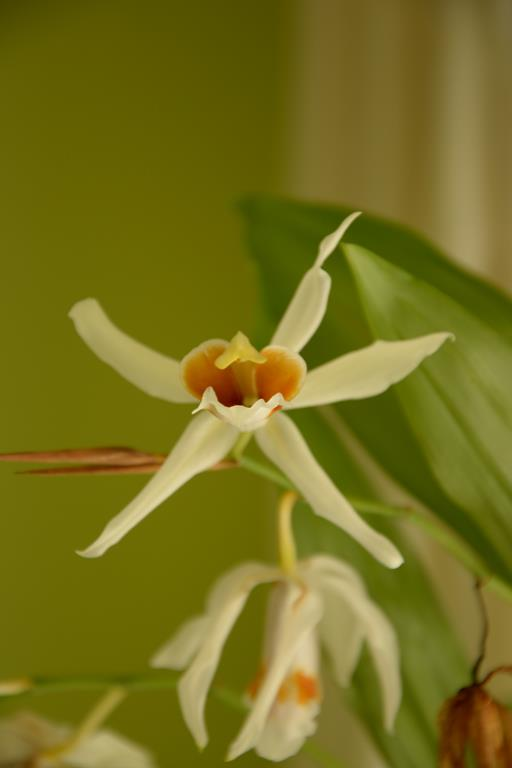 Meine Orchideensammlung Dsc_2210
