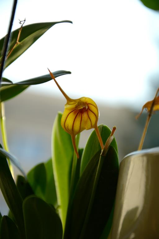 Meine Orchideensammlung Dsc_2211