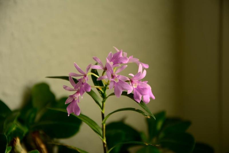 Meine Orchideensammlung Dsc_2212