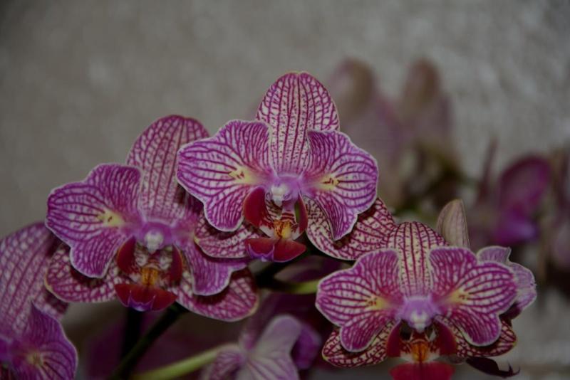 Meine Orchideensammlung Dsc_2213