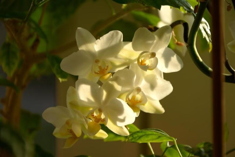 Meine Orchideensammlung Dsc_2215