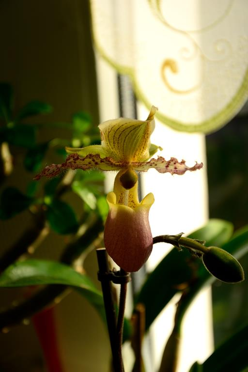 Meine Orchideensammlung Dsc_2217