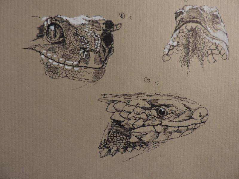 Les gribouilles d'Atna: objectif landscape et persos Dscn0413