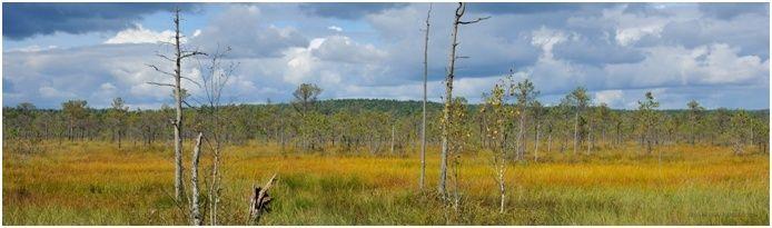 Nature d'un autre temps au Belarus Marais10