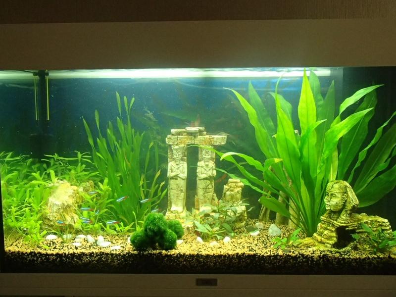 aqua juwel 125 rio  P4080110