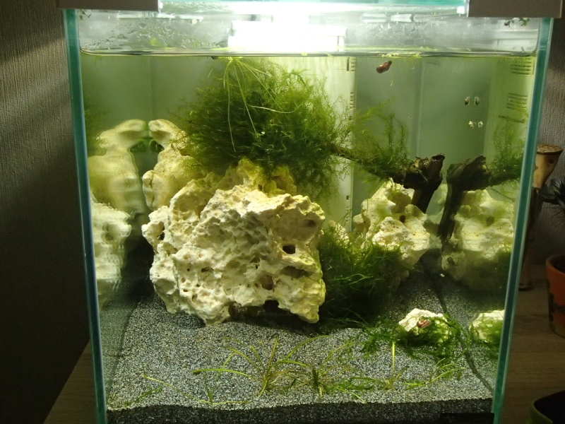 aqua juwel 125 rio  P4080111