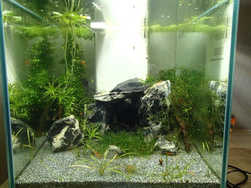 aqua juwel 125 rio  P5080213