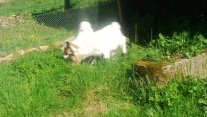 mes deux jumelles Pia & Knut D210