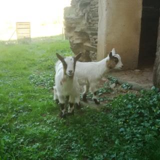 mes deux jumelles Pia & Knut Img_0014