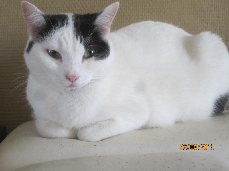 Violette - blanche et noire née en 2012 Img_2139