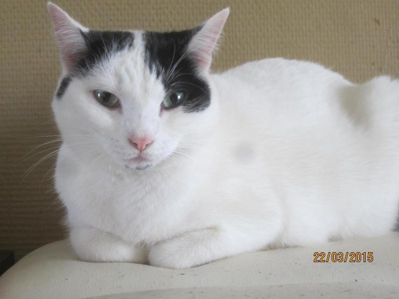 Violette - blanche et noire née en 2012 Img_2140