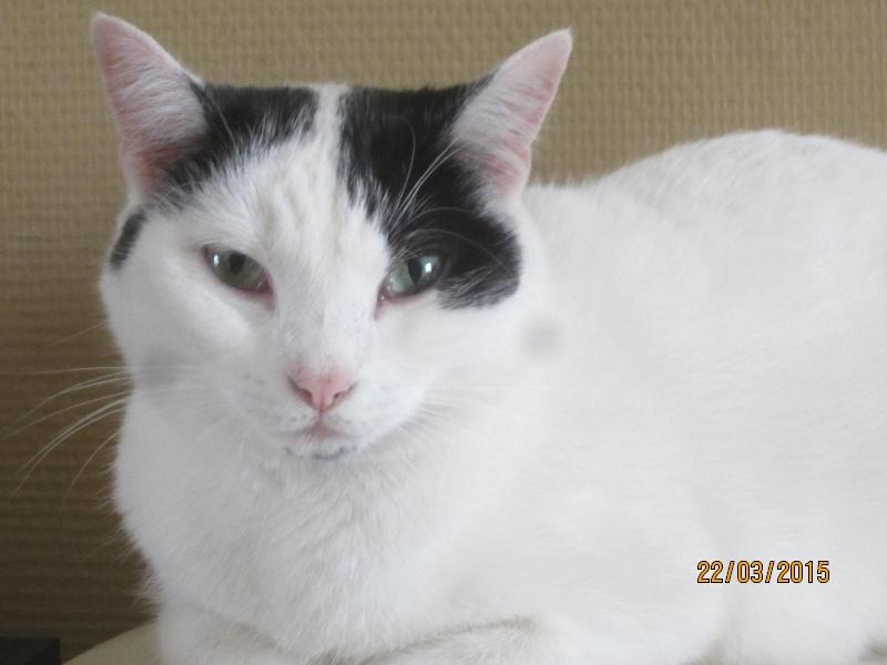 Violette - blanche et noire née en 2012 Img_2142